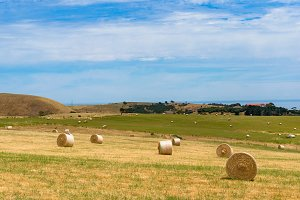 Picturesque field with round straw bales