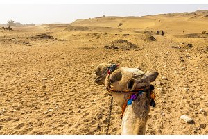 Sahara as seen by a camel rider - Egypt