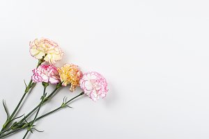 Close up of pink and yellow flowers on white background. Isolated. Copyspace