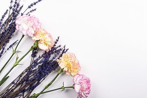 Close-up of flowers on white background. Isolated. Decor.