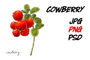 Hand-drawn cowberry