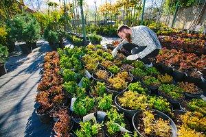 Gardener working with plants
