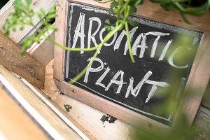 """Aromatic Plant"" on blackboard"