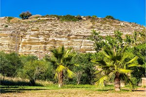 Trees at the foot of the Kourion Mount - Cyprus