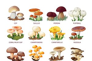 Edible mushrooms and toadstools