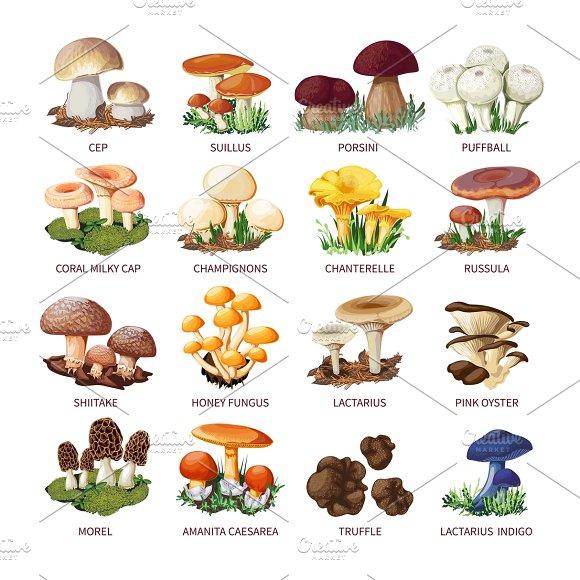 Edible mushrooms and toadstools
