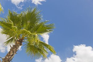 Tropical Palm Trees Against Clouds