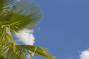 Tropical Palm Trees Against Blue Sky