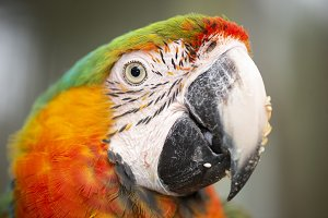 Close up of the macaw bird.