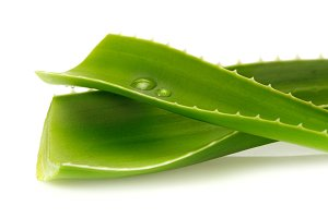 Aloe Vera with water drops