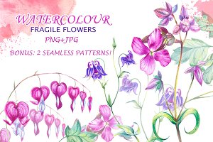 Fragile watercolor flowers