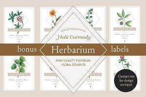 Hand drawn herbs botanical kit