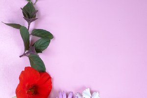 Frame by flowers on pink background