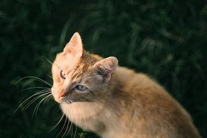 Ginger cat in grass looking up