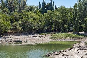 Toledo swamp