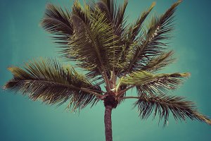 Coconut trees against the sky.