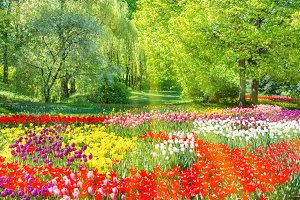Tulips garden in the green park