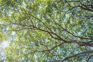 Beautiful green trees on blue sky