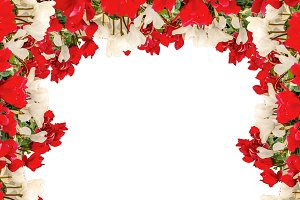 White Landscape Background with Flowers Borders