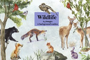 Wildlife Watercolor Clipart I