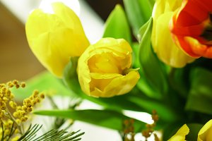 Bouquet of yellow tulips and mimosa