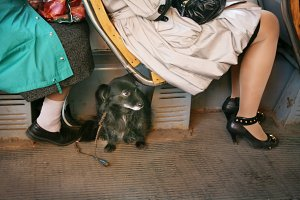Small dog in a tram
