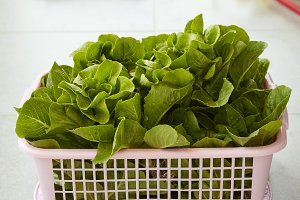 Organic Lettuce in a Basket