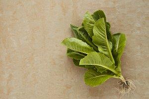 Cos romaine lettuce on a rustic granite table