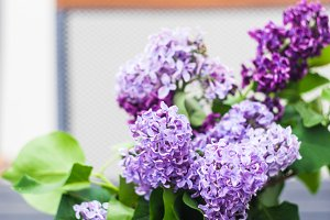 Lilac flowers in a bunch