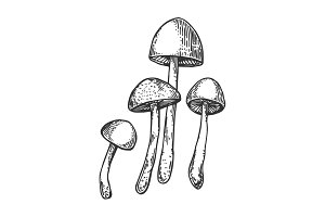 Narcotic mushroom engraving vector illustration