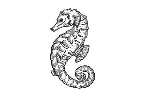 Sea horse animal engraving vector illustration