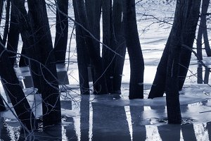 Trees silhouettes in water