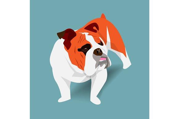 Cute french bulldog with shadow