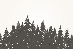 Forest landscape2