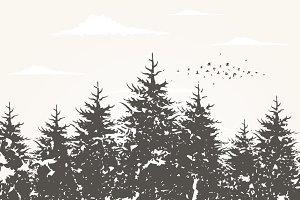 Forest landscape5
