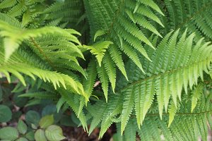 fern plant leaves background