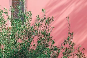 Tropical plant on pink.
