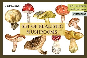 Collection of realistic mushrooms