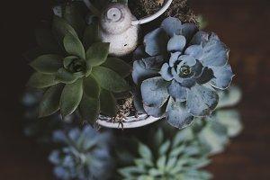 Succulent Stock