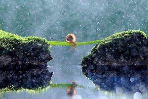 Snail in Rain Bokeh