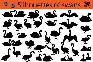 Silhouettes of swans