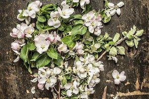 Spring garden blossom bunch