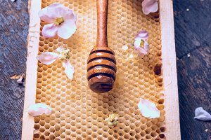 Honey dipper on honeycomb