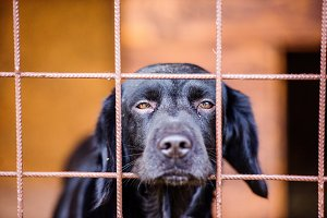 Close up of sad black dog in cage