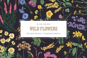 Wild flowers,herbs,herbaceous plants