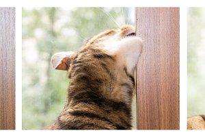 Harmful habit in cats.