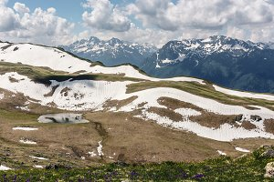 Alpine meadows and flower glades.