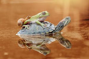 Turtles carry frogs and slugs