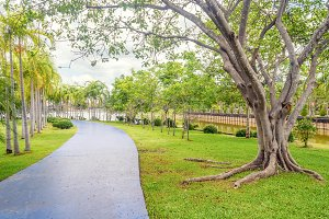 jogging track and big tree in park