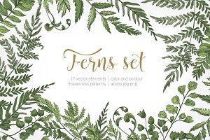 Ferns green foliage - set, backdrop